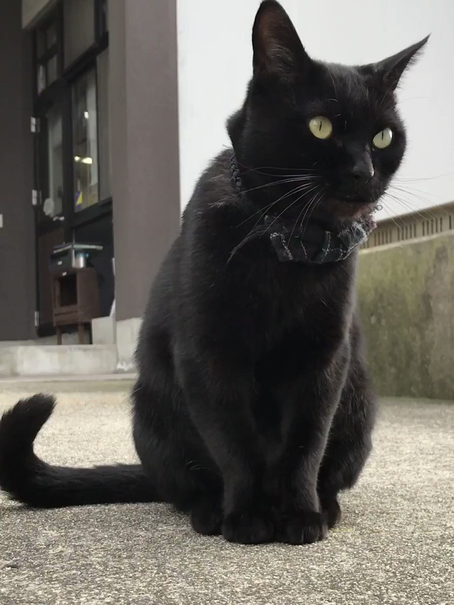 時をかける猫 221