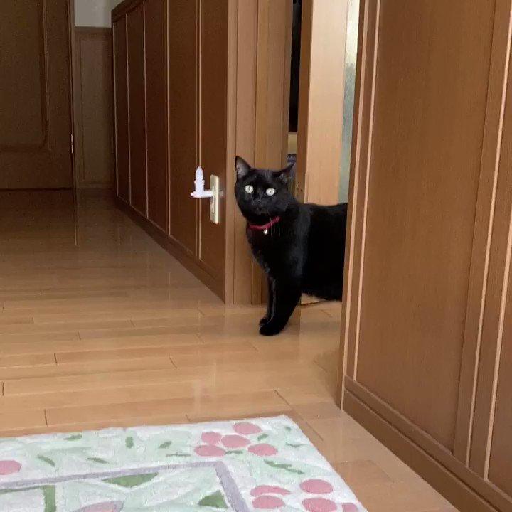 実家なう。玄関から出たい猫 VS 出させない俺