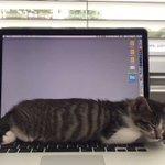これぞまさにスリープ機能!?猫の呼吸に合わせて、パソコンの画面が切り替わる!