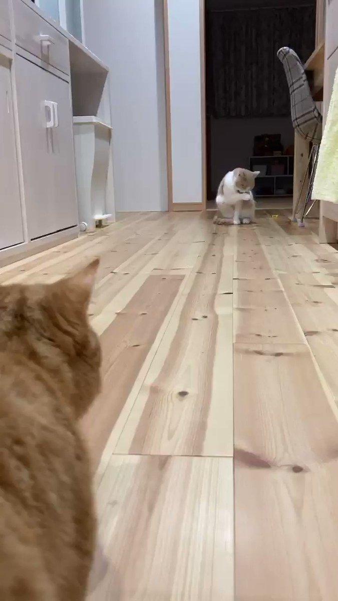 猫のランウェイランウェイは別名キャットウォークとも言うらしいので勝手に納得