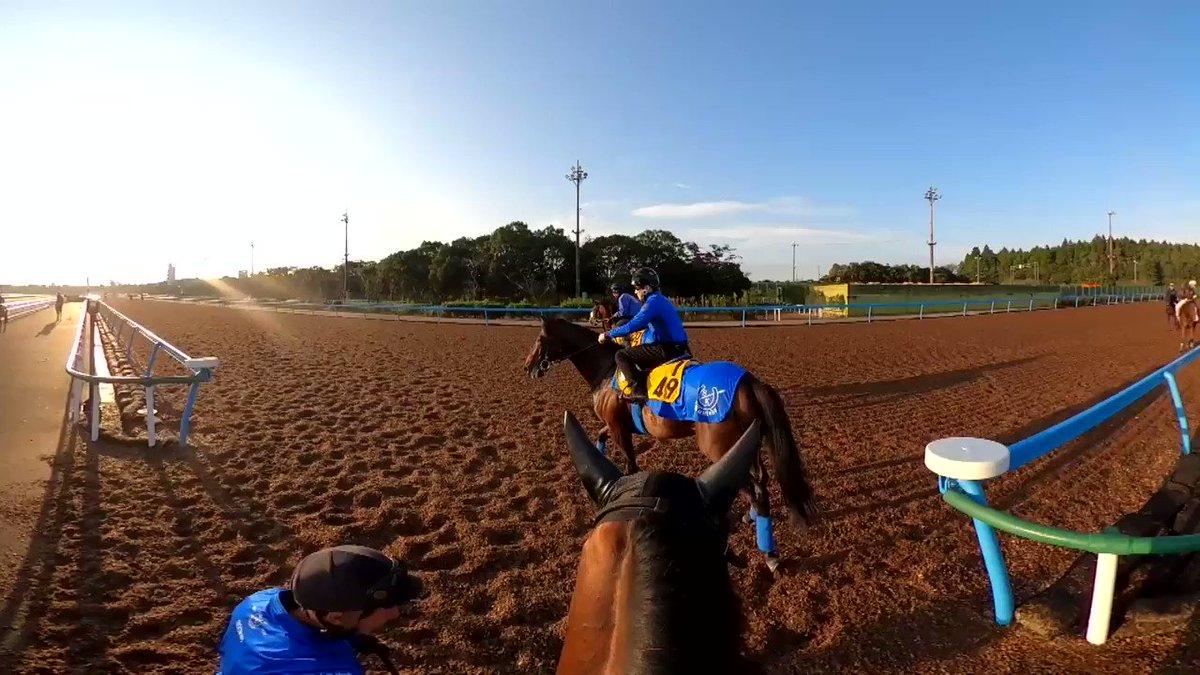 アーモンドアイの追い切り映像(10月28日撮影)騎乗するルメール騎手からの映像、フルVer.です。※音声が乱れていますがご容赦ください。#GREENCHANNEL #ALMONDEYE #トレセンまるごと情報局  #アーモンドアイ