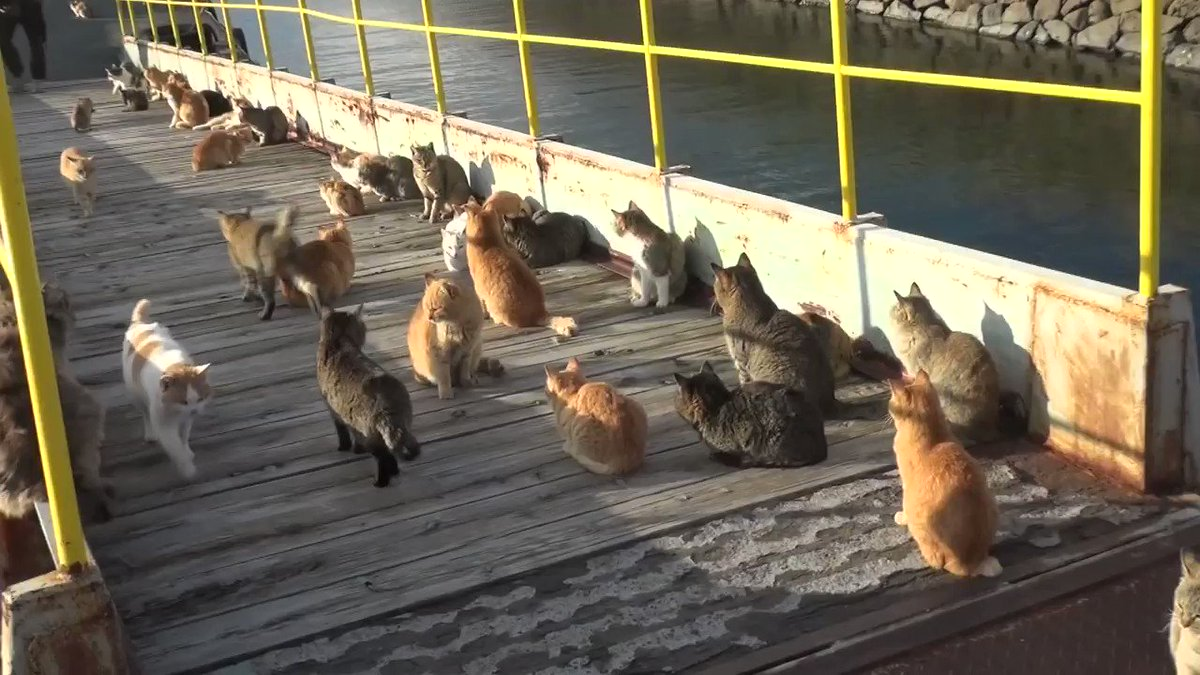 朝の太陽で暖を取る猫寒い冬の夜を過ごした猫が朝の太陽で暖を取る。