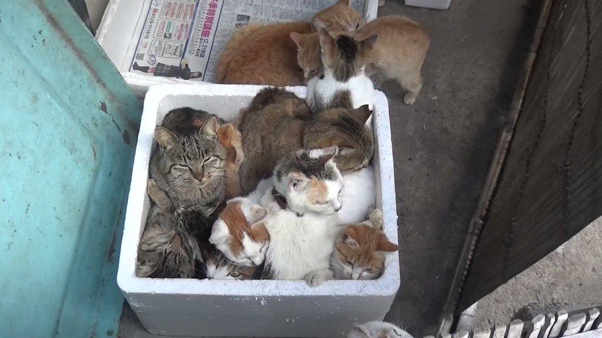 貓箱 Jbs7hRtAv03WfJTe
