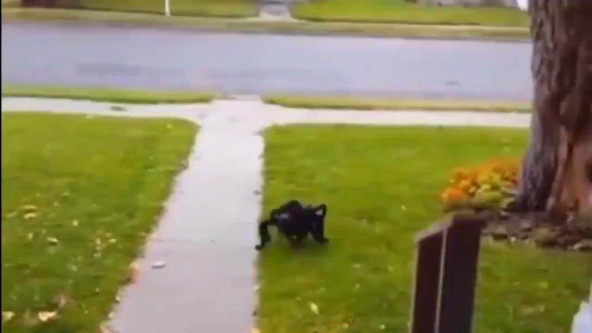 クモのコスプレをした犬がマジで怖い!夜道であったら絶叫レベル…