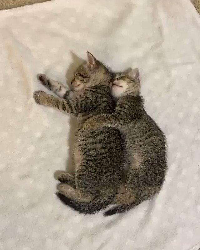 仲良し睡眠中…