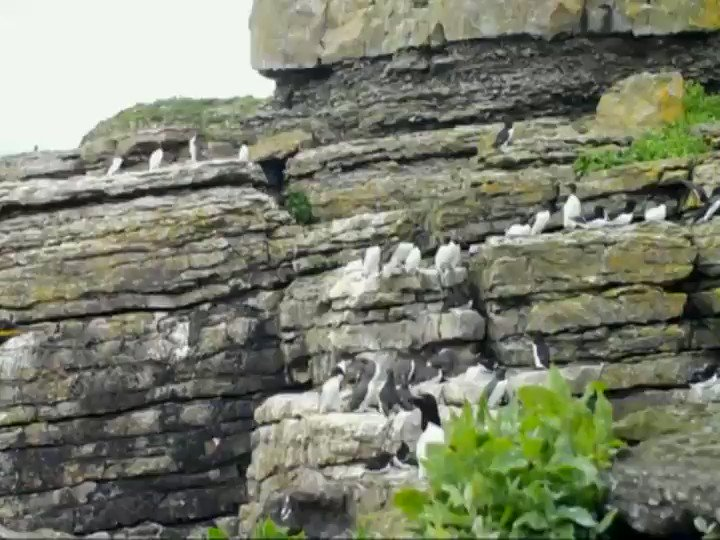 Interested in studying #EuropeanShag in the #MenaiStrait with @jjwaggitt and colleagues @sos_bangor_uni? Go check out this great field-based PhD Opportunity! #tagging #ringing #cameratraps #observations https://t.co/KlbCIzCVfu
