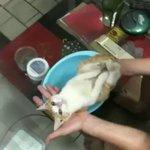 赤ちゃんの入浴方法をレクチャーするおじいちゃん。赤ちゃん役は…猫!?