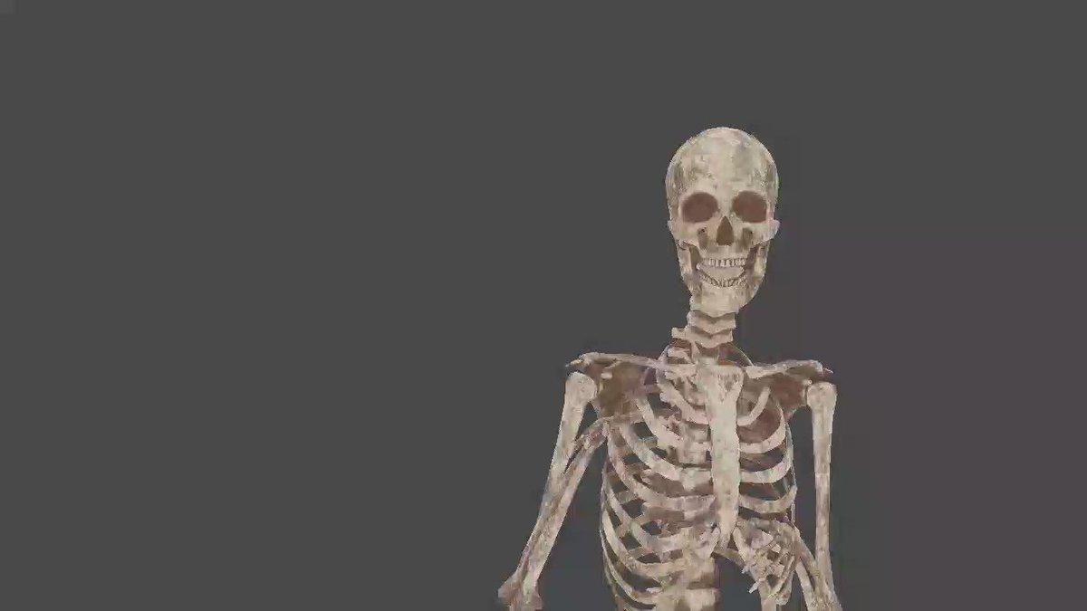 今日、大学で肺の解剖の授業をしていたら、ふと「自分を標本にしちゃえば良くね?」と思いついたので、アセットストアで買った骨モデルをVRMにして、Virtual Presentation Spaceに読み込んでサンプル講義つくってみた。思ったより難しい!