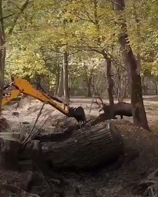 Moving! ❤️ Deer and monkeys fighting back against bulldozers destroying their homes. Let's protect wonderful Mother Earth!