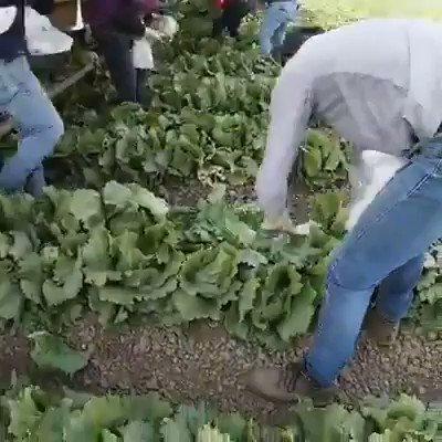 Tell us your favorite Thanksgiving dish, and we'll share some of what we know about the work behind the ingredients.  #WeFeedYou #ThankAFarmworker https://t.co/QRPQUCMX1t