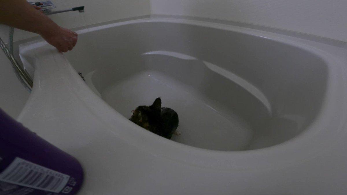 猫洗おうとしたら襲われてガチめの悲鳴上げる俺見て