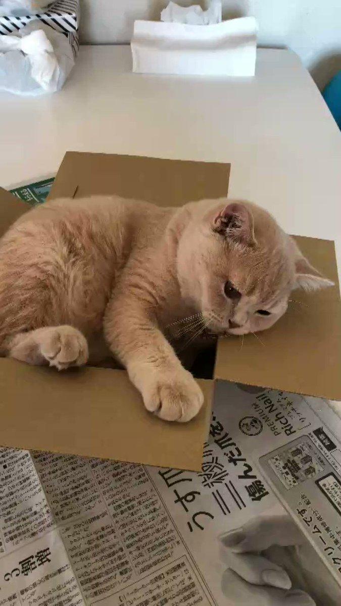 成長して身体が大きくなったことに気がついてないのか、箱に収まりきろうとしてる。