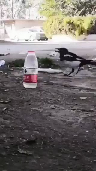 This crow has a degree in physics.