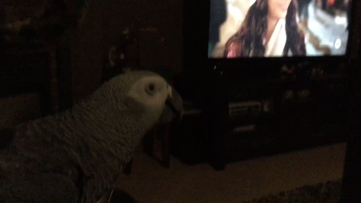 On this cold and windy night I'm enjoying snacks by the fireplace while watching @hallmarkchannel Christmas movies. 🤣🤣🐦❤️ Yes, I've been sucked in too. 🤣🤣🐦❤️💕🎄 #hallmarkchristmasmovies #AfricanGrey #parrot #pets #animals #ONStorm #StayHome