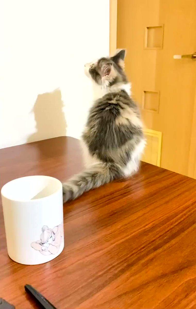 ちゃっかり宣伝できる良い猫である🐈 #左ききのエレン #言語化力