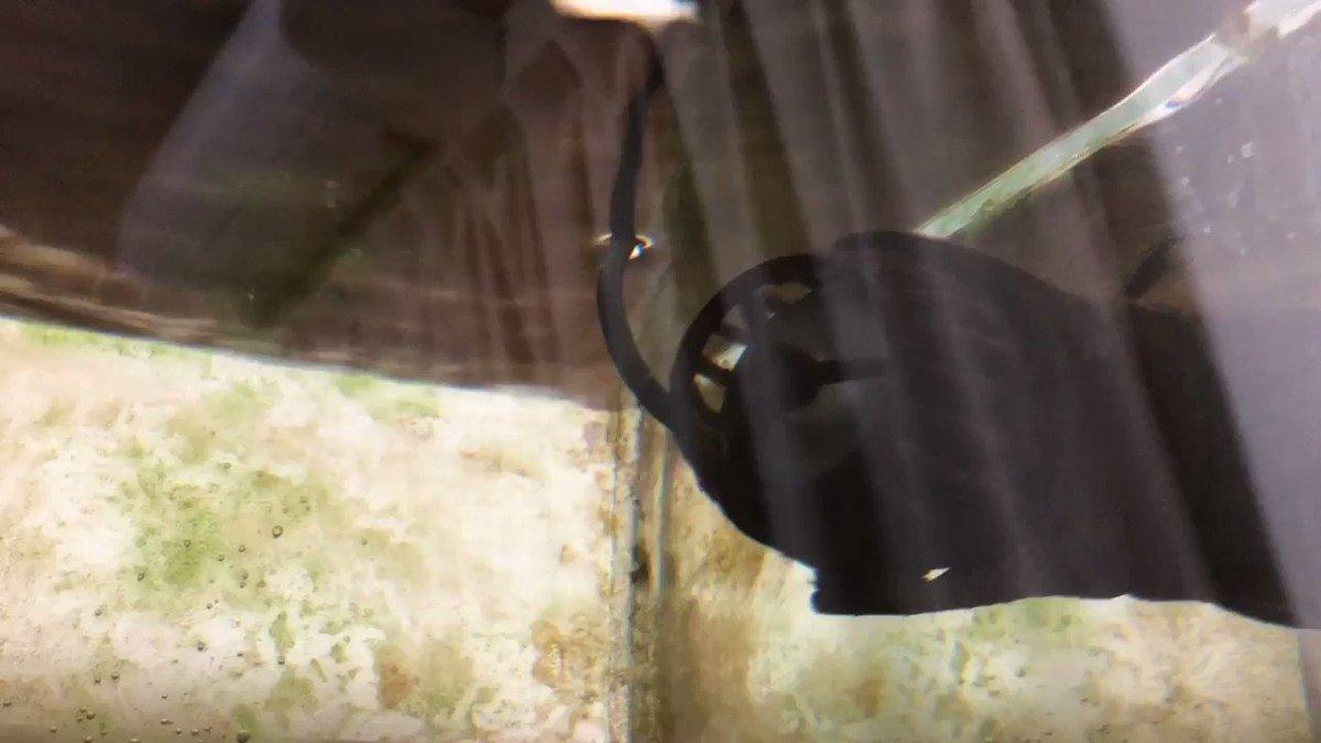 水流ポンプの掃除を半年ぶりにしたら掃除前より12倍ぐらい回転力が上がってびっくりしました。掃除大切....