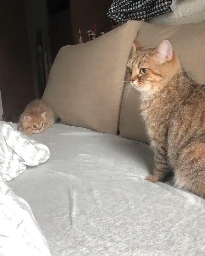 どうしても構って欲しい猫