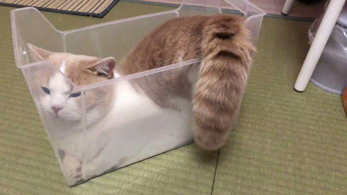 スリムなプラケースの中でくつろぐ猫
