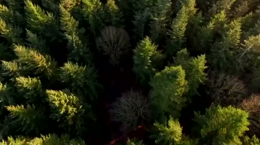 The Trump Administration is proud of its leadership in the One Trillion Trees initiative as we recognize the critical need to restore and conserve our forests both at home and around the world. #TrillionTrees🌲   🎥: @USAID