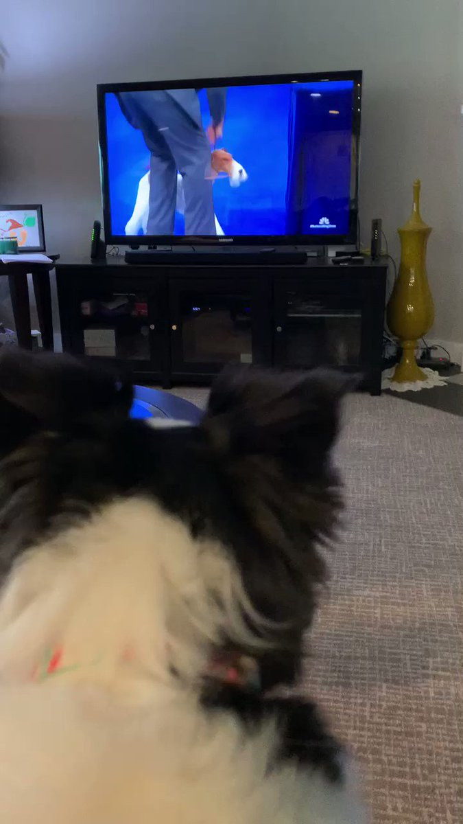 Ellie does not like these stranger dogs in her living room! She is adamant about following social distancing rules. 😂 #NationalDogShow #puppylove