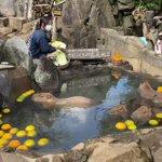 カピバラの入浴シーン・入浴しながら白菜をもぐもぐ!