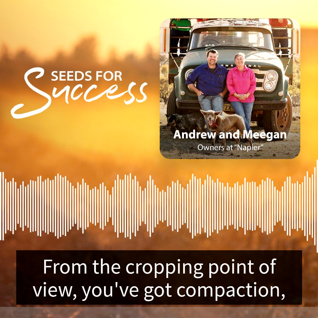🎙️ In our latest Seeds for Success podcast episode Andrew and @YoungMeegan catch up with @AgSTAR_Farming to talk cows, cropping and how good advice @alrayner302 and tough decisions helped get them through drought. LISTEN HERE 🎧 https://t.co/sfBz6i0Twh
