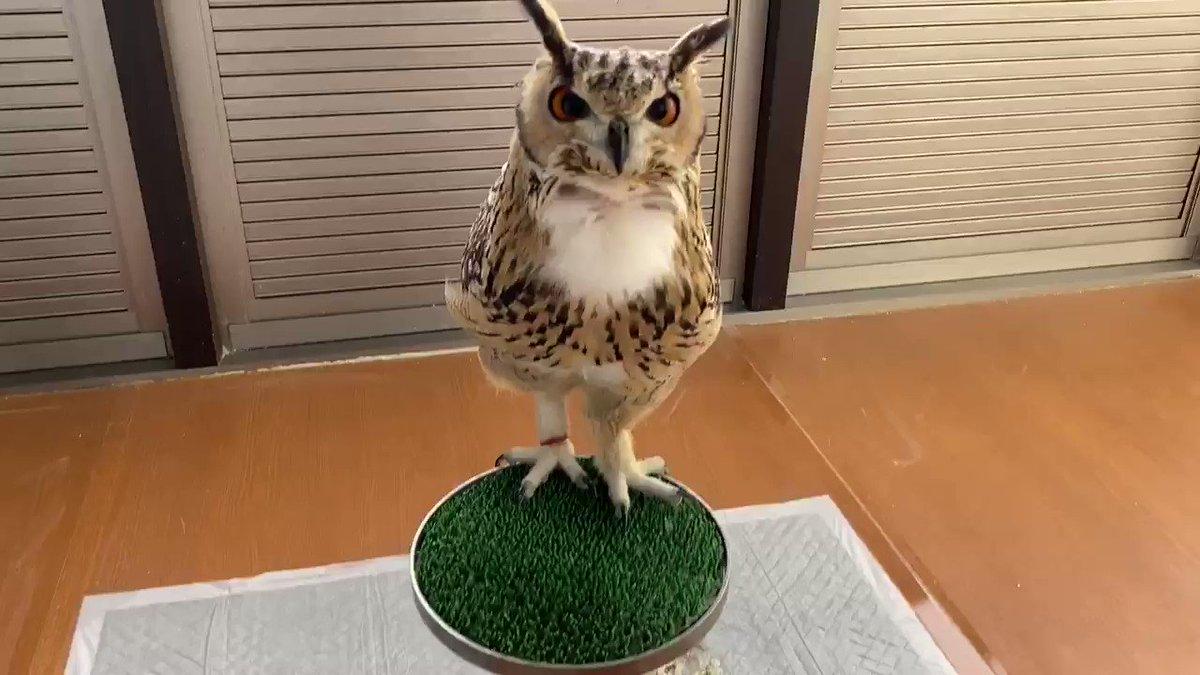 フクロウのほほほほがたくさん聞きたいあなたへ
