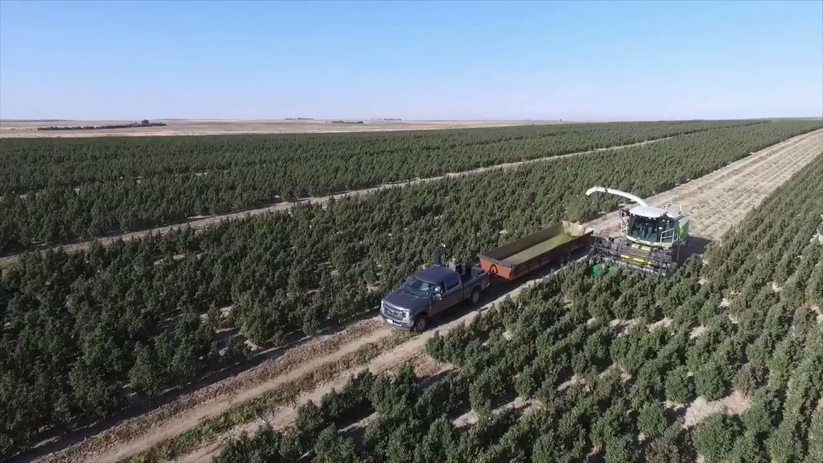 Image for the Tweet beginning: Drone footage of a #hemp