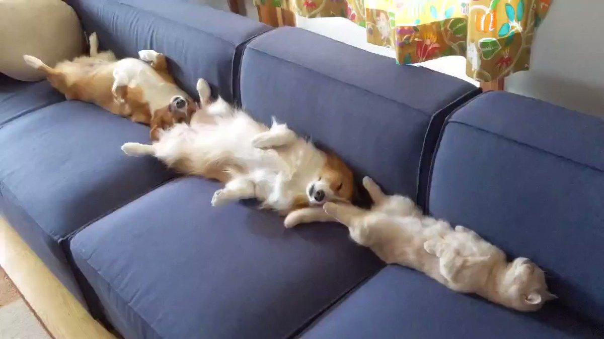人間4人掛けのソファだぞそれを、たった3匹で…
