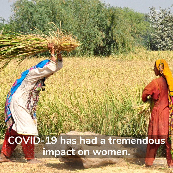 The #COVID19 pandemic has further exacerbated existing inequalities, especially for rural women.   @FAO Mina Dowlatchahi, explains how FAO is supporting rural women in #Pakistan 👉  #OrangeTheWorld #16Days