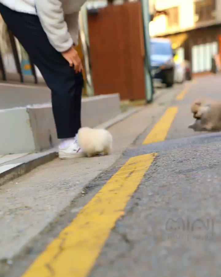 海外で撮影された壮絶なストリートファイトです。心臓の弱い方は閲覧時お気をつけください📹