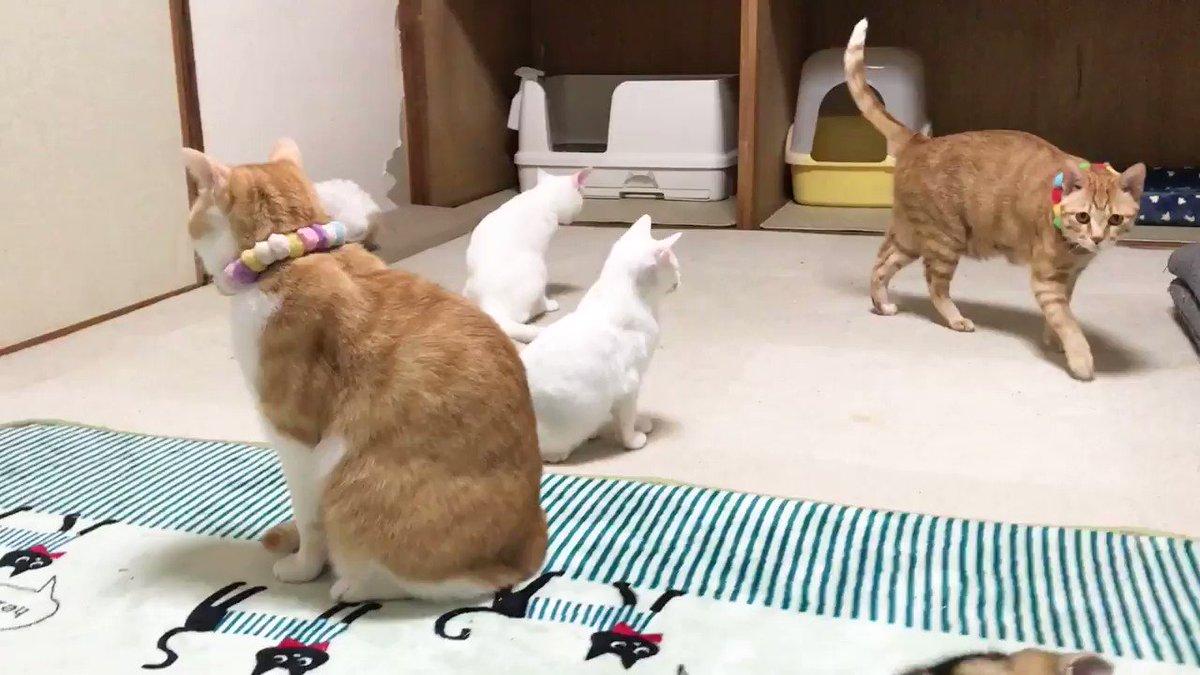 好きすぎて先へ行かせたくない子猫