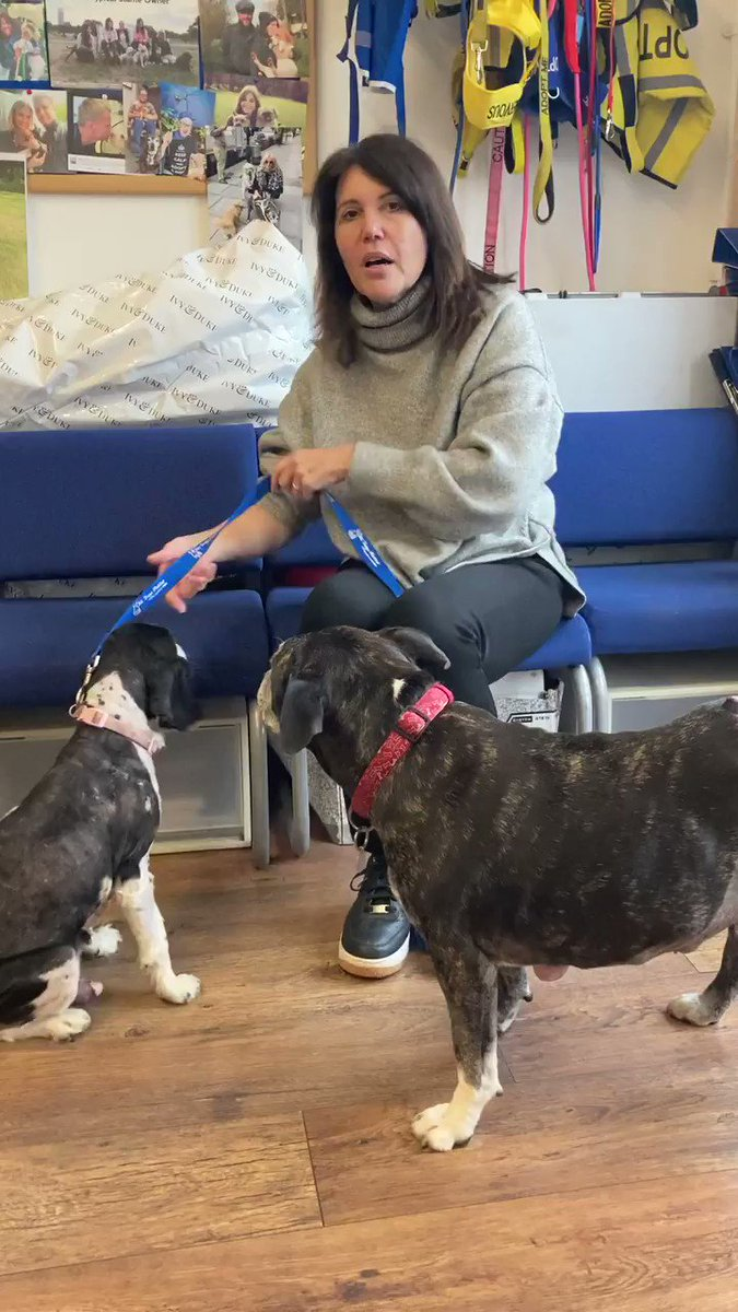 Today's auction item is different. We're asking you to pledge a donation towards Holly and other dogs that come into ADM needing emergency treatment.   Could you help Holly and others like her? Pledge an auction donation towards our dog's care by emailing info@alldogsmatter.co.uk