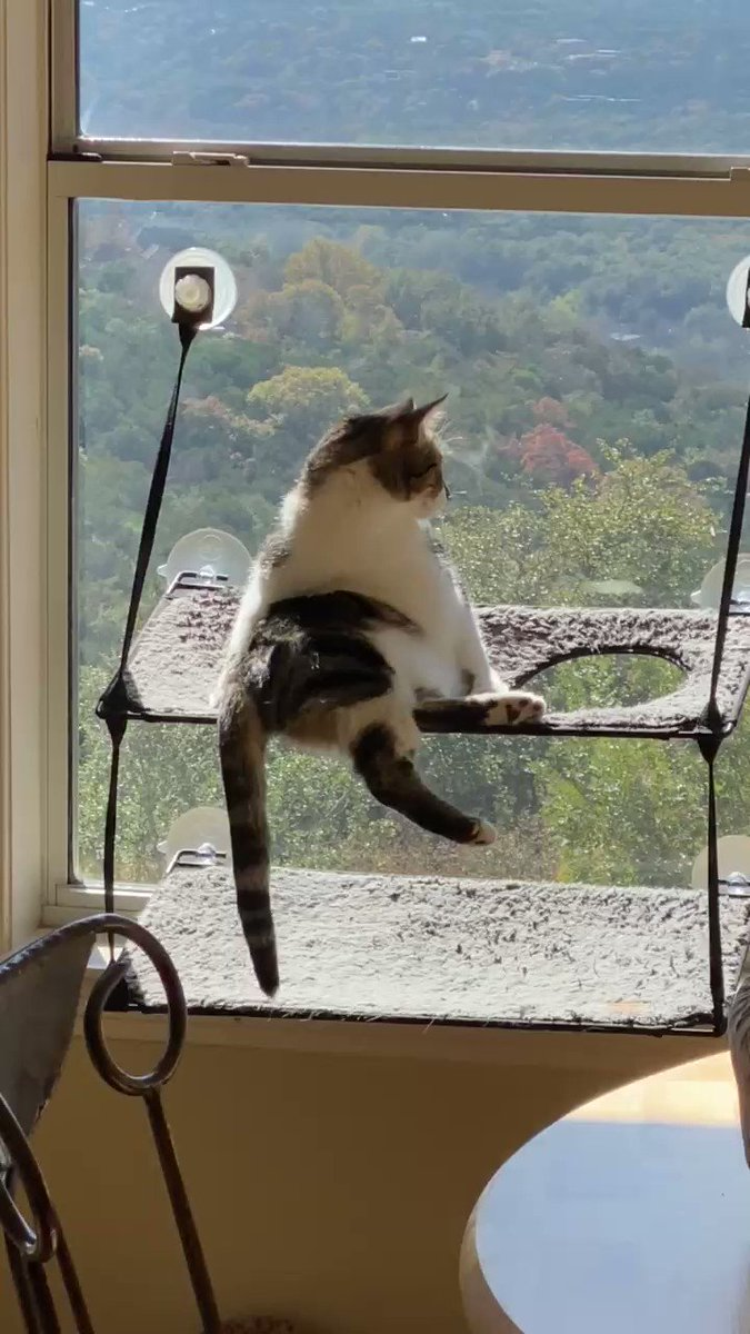 A time to reflect #cats #CatsOfTwitter #Caturday #CatVideos