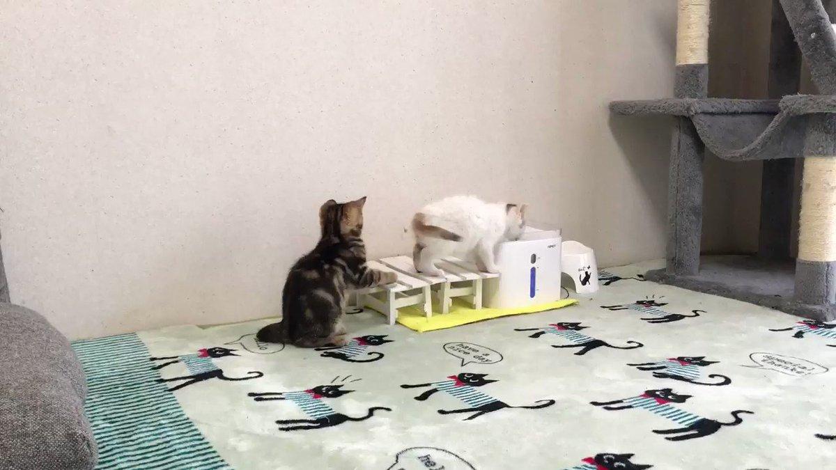 子猫の尻尾が気になる子猫