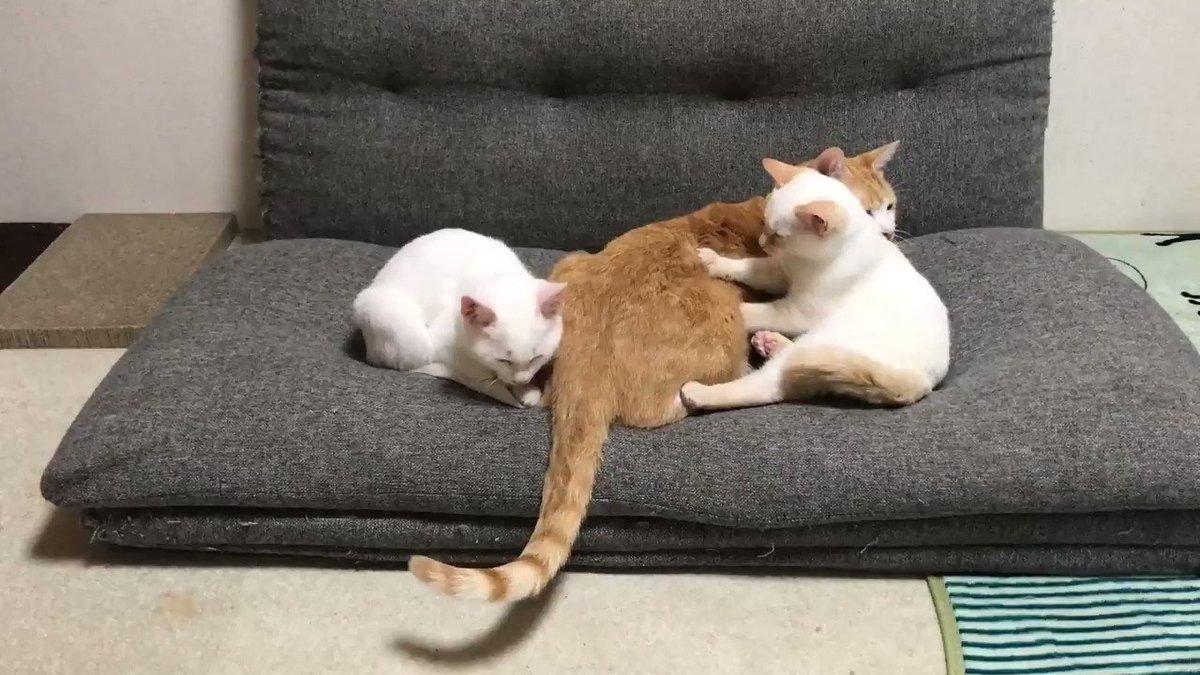 「お客さん、凝ってますね。猫背が酷いですよ。」
