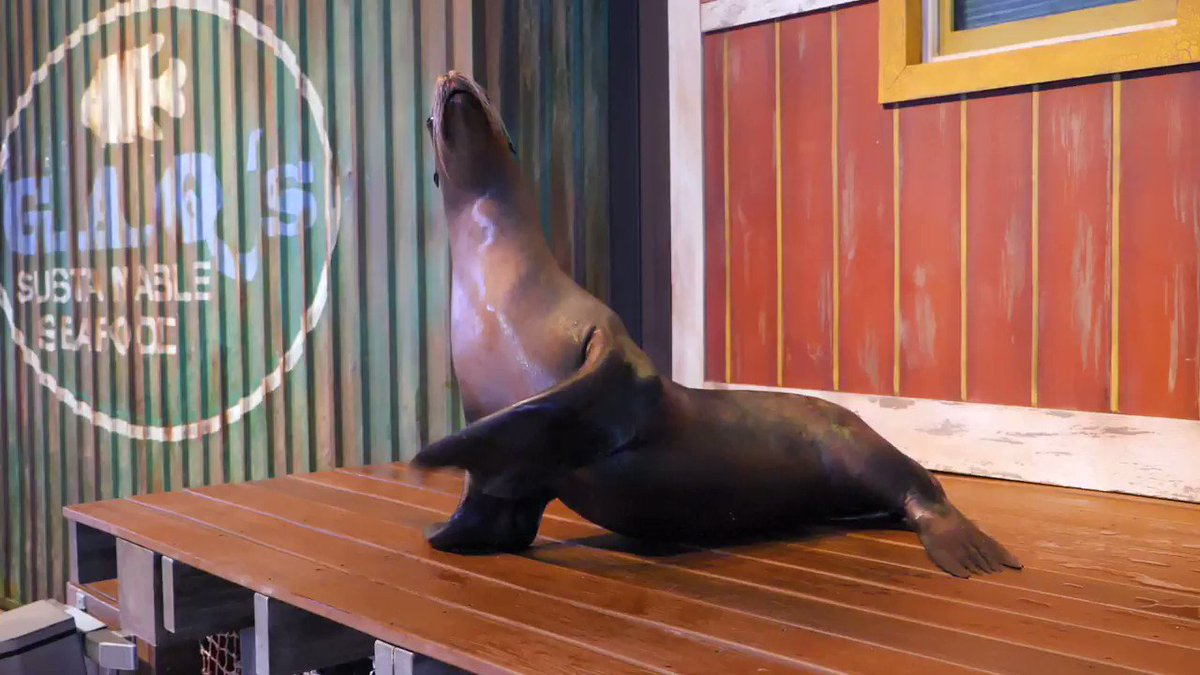 Take a peek behind-the-scenes with our sea lions! A big thank you to @truistnews for their continued support of our sea lion program at Georgia Aquarium!
