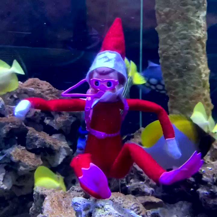 Santa's lil elf helper checking in on his  friends here at the aquarium!🐟🤿#FloridaAquarium #ElfOnTheShelf #ProtectAndRestore