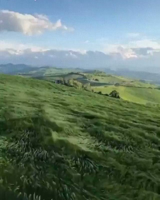 Grass waves are extremely satisfying!