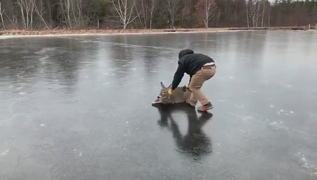 Because you want to see a man saving a deer that is stuck on a frozen lake back to safety.