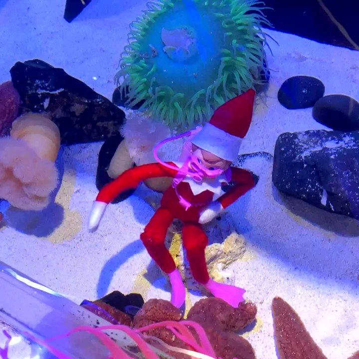 Have your s(elf) a merry little Christmas!🎅🤿 #FloridaAquarium #TheElfOnTheShelf #MerryChristmas