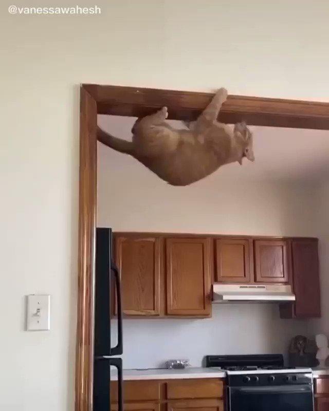 kedi için imkansız yoktur