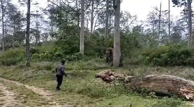 Exchange between an elephant and forest guard in Valparai...