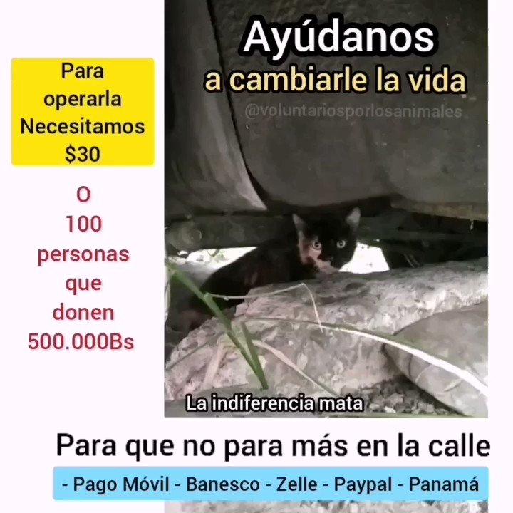 Necesitamos a 44 personas que puedan donar (500.000Bs) sólo $0,3 para operar a esta gatica y que no para más en la calle (BANESCO) RIF. J-29842051-0 Asoc. Civil Voluntarios por los Animales. 0134.0345.7434.5105.9818 voluntarios_porlosanimales@yahoo.com