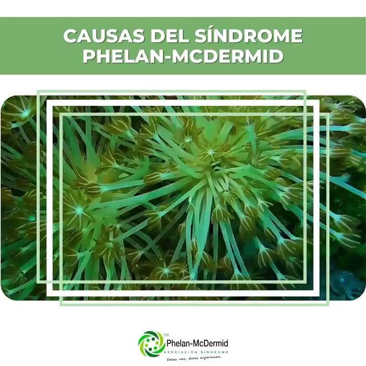 ✅ ¿Sabes cuáles son las causas de #SindromePhelanMcDermind?  💚 El síndrome de Phelan-McDermid es una condición genética que se produce debido a la deleción del cromosoma 22q13.   📗 Para más info ➡️⬅️  #phelanmcdermid #22q13 #phelanmcdermidsyndrome