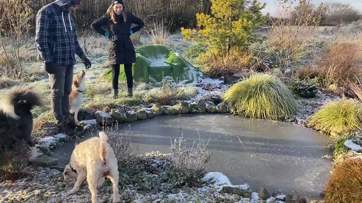 Yes it was that cold this morning 🥶 #icymorning #frozenpond #pondskating #wintergarden #idareyou
