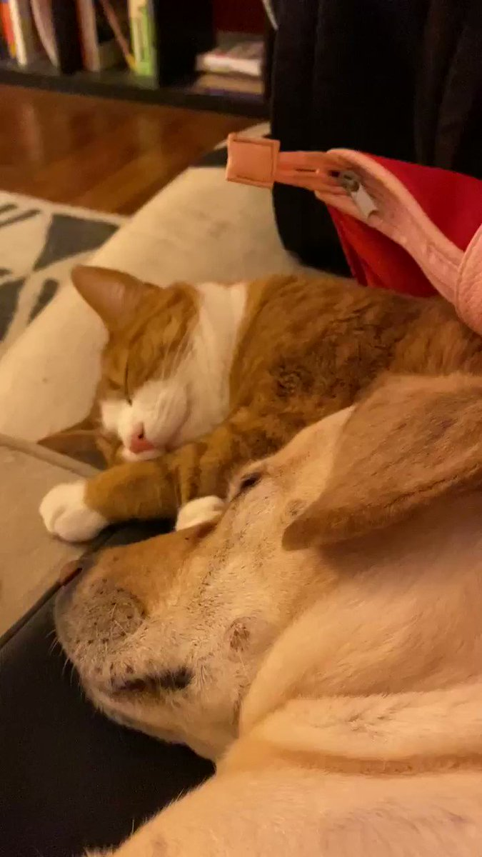 TIMELINE CLEANSE: my dog using my cat as a pillow and snoring. Also my computer coming back on after an update. Am I doing this right? Do you feel cleansed?