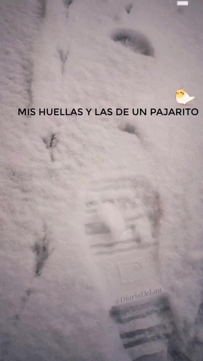 🐦  ❄️  ___ #Madrid #MadridNevado #MadridBajoLaNieve #quedateencasa #Apocalipsis #nieve #Filomena #spain #espana #FelizLunesATodos #happyMonday #frozenlandscapes #frozen #FelizLunes