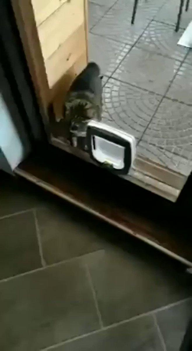 「初めて」はなんでも怖い。はじめての猫用ドアにブチ切れる猫!w