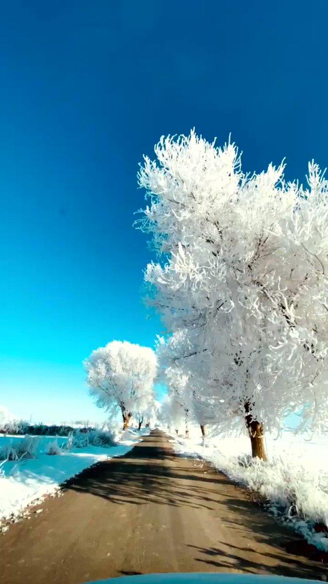 先月スペインで例外的な大雪が降ったことが話題になったが、その直後に撮影された霧氷となった並木の動画。場所は同国南東部のアルバセテ市の近郊。白くなった木の背後に快晴の青い空が広がっている印象的な風景。撮影者は地元の Mario Miranda 氏。 via @mariomiranda_es